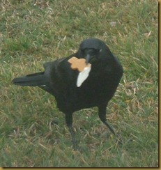 crow gingerbread