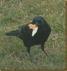 crow gingerbread