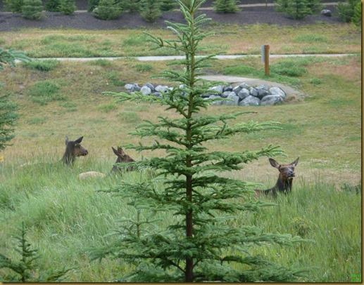 elk out back