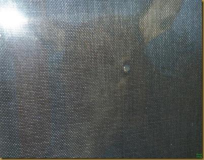 3Elk at window
